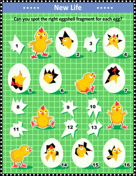 Newborn Chicks Visual Puzzle, Commercial Use Allowed