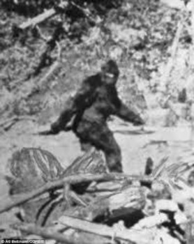 Newspaper research Article about Bigfoot