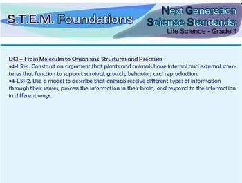 Next Generation Science Standards Flashcards - Grade 4