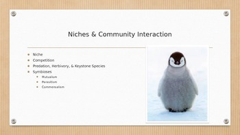 Niches & Community Interactions