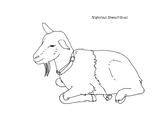 Nigerian Dwarf Goat Coloring Page