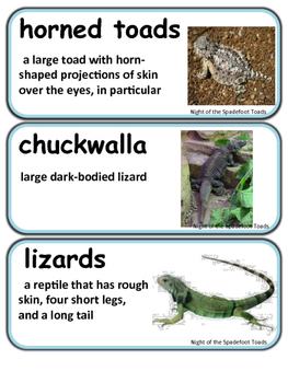 Readygen Night of the Spadefoot Toads Vocabulary  Word Wall Cards Unit 1