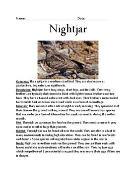 Nightjar - bird informational article lesson facts questions