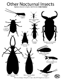 Nocturnal Insect Guide