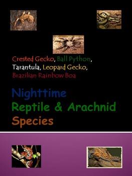 Nighttime Reptiles & Arachnids Species