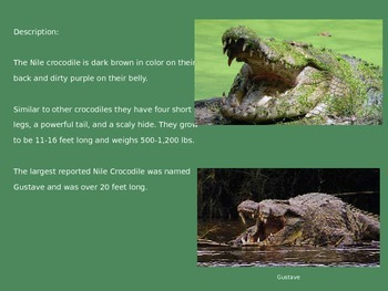 Nile Crocodile - Power Point - Information Facts Pictures