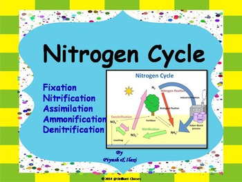 Nitrogen Cycle -  Describing whole cycle processes with human impact