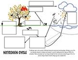 Nitrogen Cycle Diagram & Notes