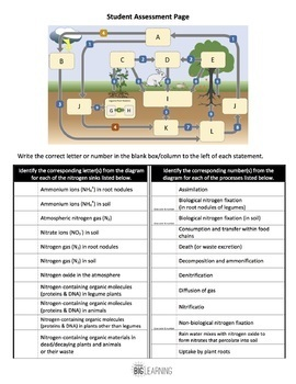 Nitrogen Cycle Interactive Diagram (Task Cards & Assessment Page Included)