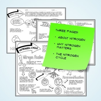 Nitrogen Cycle Guided Graphic Notes