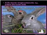 Nitrogen Cycle Lesson