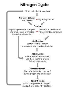 Nitrogen Cycle Poster