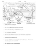 Nitrogen Cycle Worksheet- HS-LS2-4 Aligned