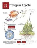 Nitrogen Cycle in the aquarium
