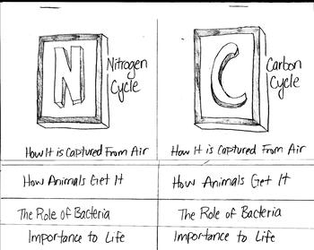 Nitrogen Cycle vs. Carbon Cycle Color-able Foldable