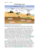 Nitrogen Cycle with KEY