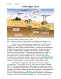 Nitrogen Cycle with KEY