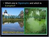 Nitrogen Cycle and Phosphorus Cycle