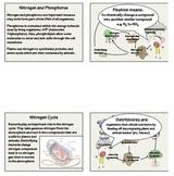 Nitrogen and Phosporus Cycles