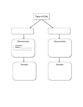 CELLS: Prokaryotes & Eukaryotes  (No prep!)