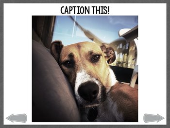 No Print: Caption This! Animal Expressions