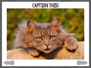 No Print Caption This: Crazy Cats