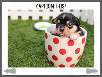No Print: Caption This! Dogs In Action