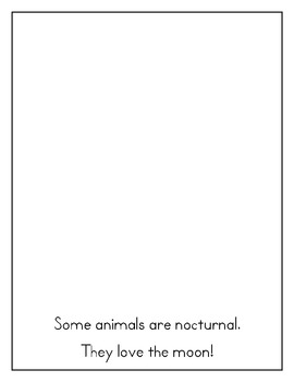 Nocturnal Animal Book