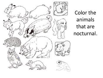 Nocturnal Animal Color sort
