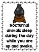 Nocturnal Animal Mega Bundle  (Emergent Reader, Lap Book, and Vocabulary Cards)