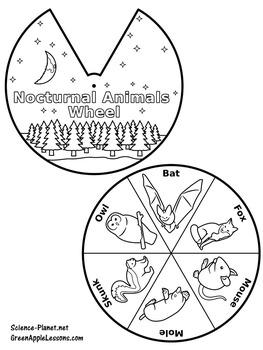 Nocturnal Animals Craft