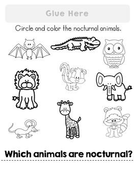 Nocturnal Animals Flipbook