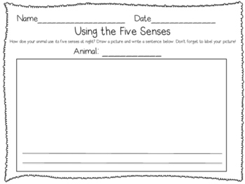 Nocturnal Animals Graphic Organizer