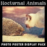 Nocturnal Animals | Science Posters | Science Vocabulary