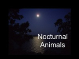 Nocturnal Animals Smartboard