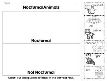 Nocturnal Animals Sorting Activities