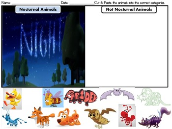 Nocturnal Animals Sorting