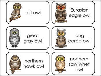 Nocturnal Animals themed Picture Word Flash Cards.