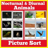Nocturnal Diurnal Animal Sort Cards