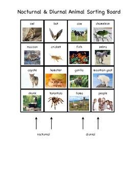 Nocturnal & Diurnal Animal Sorting Board