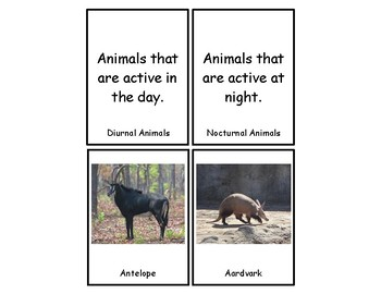 Nocturnal & Diurnal Animals