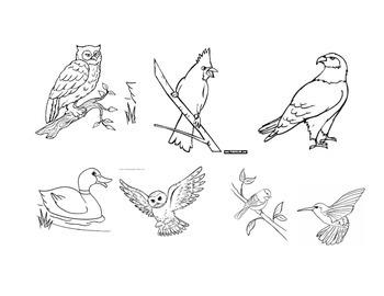 Nocturnal Diurnal Bird Sorting