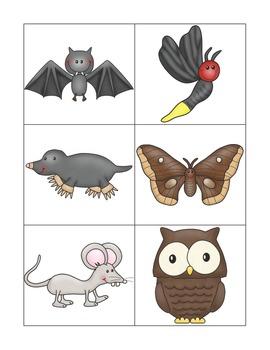 Nocturnal and Diurnal Animal Sort