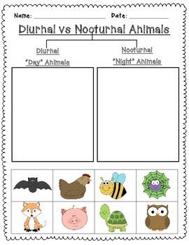 nocturnal and diurnal animal sort freebie tpt. Black Bedroom Furniture Sets. Home Design Ideas