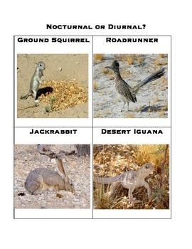 Nocturnal or Diurnal Desert animal sort