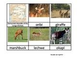 Nomenclature Cards - Animals - Africa - Democratic Republi
