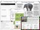 Non Chronological Report Writing - Elephants