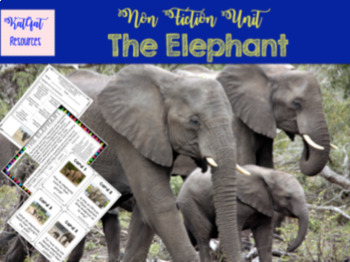 Non Chronological Report Writing - Elephants