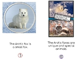 Non- Fiction Arctic Fox Reader with More Repition