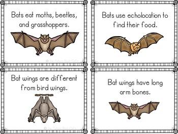 Bat Fact Cards